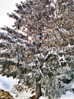 Dorf Mürren Schneebaum